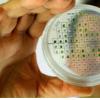 以色列科学家从植物中产生能量