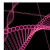 Denisovan DNA影响现代大洋洲种群的免疫系统