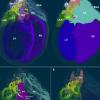 科学家创建大鼠心脏神经元的3D地图