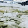研究人员在南极洲绘制了绿色雪藻绽放的地图