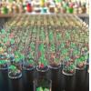 加快生物系统设计以实现可持续的生物制造