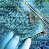 精确的基因组编辑进入现代时代