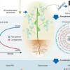 科学家构建高质量的基于图的大豆基因组