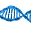 绘制基因组图谱可以帮助拯救本地老鼠