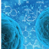 浸润肿瘤的免疫细胞可能发挥比以前认为更大的癌症作用