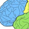 新信息的错误大脑处理是精神错觉的基础 发现了新研究