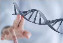 新研究发现遗传因素在深情女性中起着重要作用
