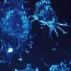 代谢酶驱动淋巴瘤 是潜在的药物靶标