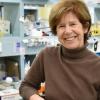 研究人员发现潜在的治疗血管疾病的新疗法