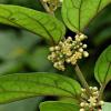 研究表明植物化合物克服了对糖的渴望