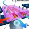 设计模拟血管平台的新颖而简单的方法