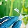 新设计的配体 用于催化反应以合成药物和有用的化合物