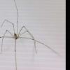 蜘蛛丝可以制造用于生物成像的镜片