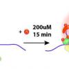 CRISPR辅助的新方法可检测活细胞中的RNA结合蛋白