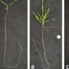 科学家确定了调节根系发育的特定分子元素