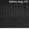 药物使细菌发光的新技术可以帮助抵抗抗生素耐药性