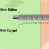 苔藓蛋白可纠正其他植物的遗传缺陷
