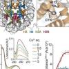 组蛋白H3-H4四聚体是一种铜还原酶