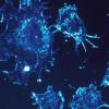 研究人员发现使用抗癌药靶向肿瘤的更精确方法