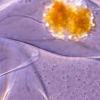 紧紧挤压时闪烁明亮 单细胞生物如何照亮海洋