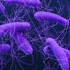 研究人员开发软件来寻找耐药细菌