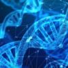研究人员设计了人工基因来感知细胞对药物的反应