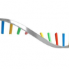 研究人员开发出新方法来研究人类疾病的遗传学
