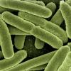 好的肠道细菌如何帮助降低患心脏病的风险