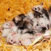 血钠浓度的升高可能会对小鼠的生物钟产生影响