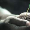 发现揭示了植物如何使纤维素增强强度和生长