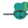 更少的脱靶命中率 更安全的CRISPR基因编辑