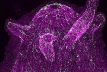 研究人员研究神经细胞是否进化为与微生物对话