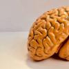 科学家发现del妄和脑能量破坏之间的新联系