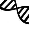 分子尾巴是基因激活的秘密成分