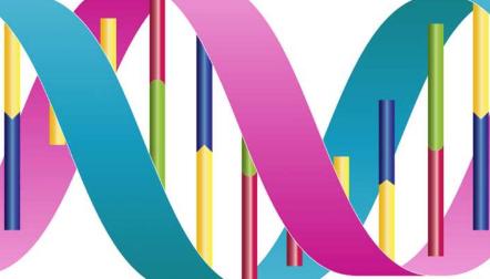 校对蛋白质可在DNA中停下来并盘绕 以纠正复制错误