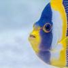 吃鱼能保护大脑免受空气污染吗