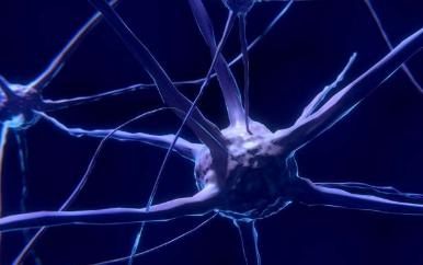 发现节省突触的蛋白质 为精神分裂症的阿尔茨海默氏病打开了可能性
