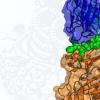 在流感病毒内部发现新的免疫靶标为通用疫苗提供了希望