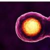 在亚波长范围内测量细胞内药物诱导的分子变化