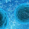 首次在活人细胞中追踪到四重螺旋DNA的形成