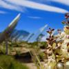 仙人掌和其他标志性的沙漠植物受到太阳能发展的威胁