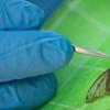 便携式DNA装置可在两个小时内检测到树木害虫