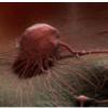 非侵入式血液检测可以在常规诊断方法之前四年检测出癌症