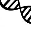 流感病毒诱导的氧化DNA激活炎症小体