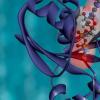 机器学习揭示了构建人造蛋白质的秘诀