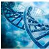 基因测试可以帮助您做出有关心脏健康的明智决定