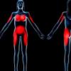 研究表明瘦素如何调节脂肪中神经元的存在