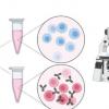 新颖的无标记成像技术带出T细胞内部的光