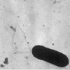 李斯特菌污染会使食品加工设施陷入全面危机状态