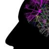 制定新的策略以选择性地将疗法提供给大脑